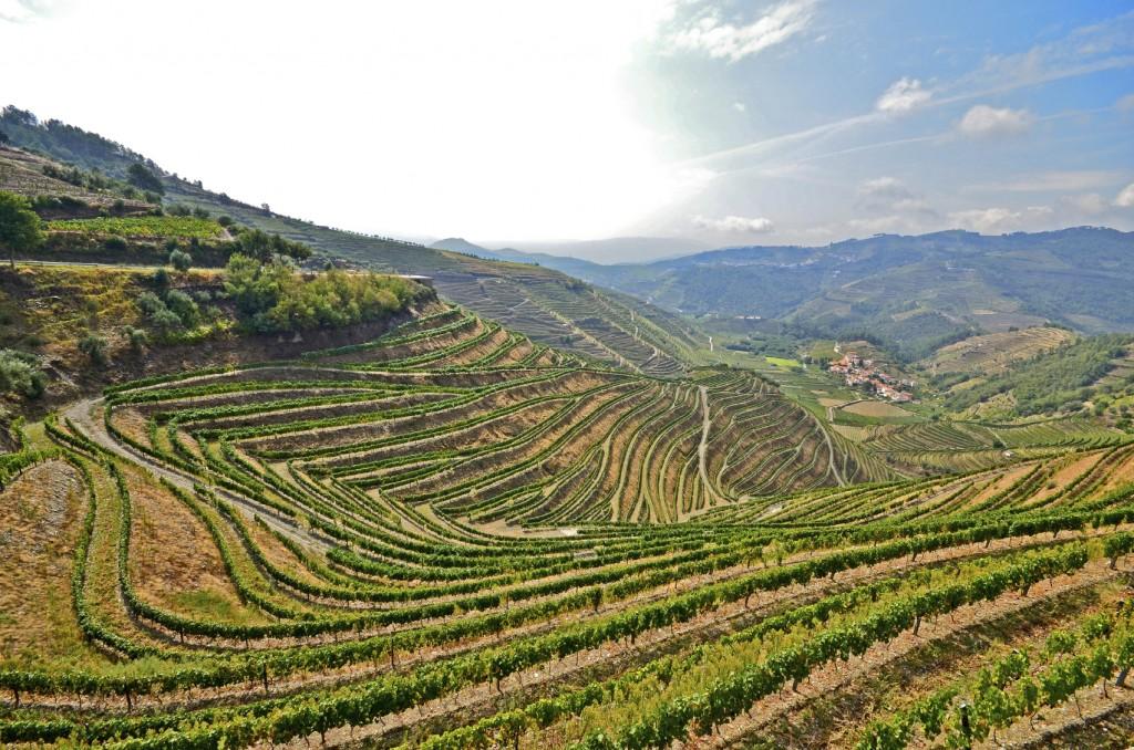 Douro Valley Vineyards iStock_000073850023_Medium