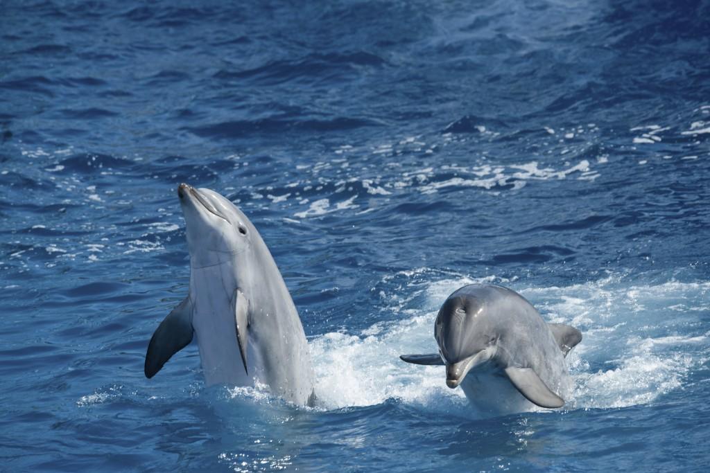 Dolphin - iStock_000055958810_Large
