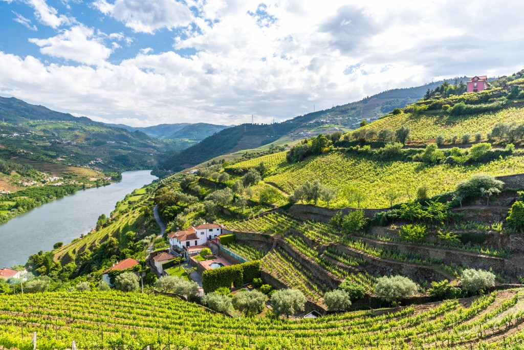 Vineyards and Landscape of the Douro river region in Portugal